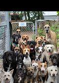 Tehachapi Humane Society